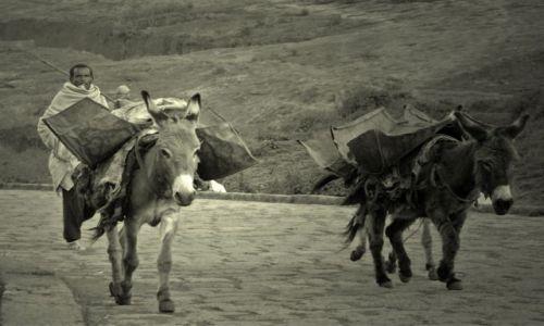 Zdjęcie ETIOPIA / pólnoc w okolicach gór Simen  / po drodze / biblijne skojarzenia z Etiopii