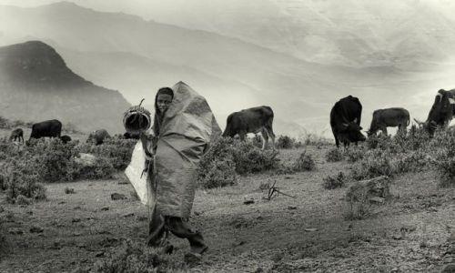 Zdjecie ETIOPIA / północna Etiopia / Góry Simen / pastuszek