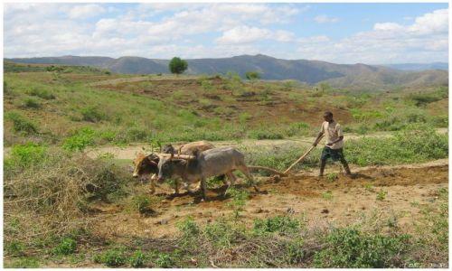 Zdjecie ETIOPIA / Etiopia południowa / w drodze do Jinka / Oracz