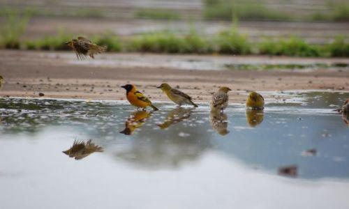 Zdjęcie ETIOPIA / brak / etiopia / ptaszki w Etiopii