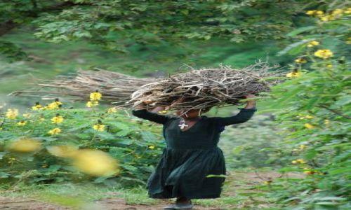 Zdjecie ETIOPIA / brak / etiopia / dziewczyna z drewnem w Etiopii