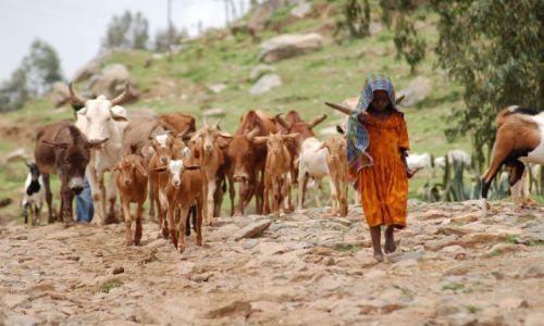 Zdjecie ETIOPIA / brak / etiopia / mała pasterka