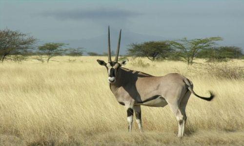 Zdjecie ETIOPIA / Awasha National Park / Nahzaret / Oryx