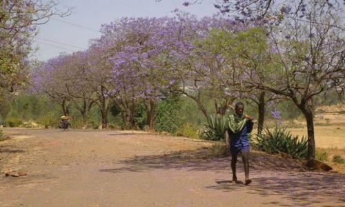 Zdjecie ETIOPIA / Północna - środkowa Etiopia / Północna Etiopia gdzieś po drodze / Do roboty do roboty hej!