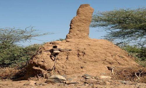 Zdjecie ETIOPIA / Dolina Omo / Jinka / Termity