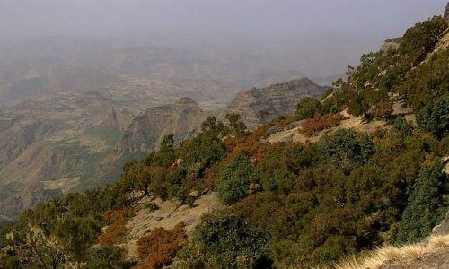 Zdjecie ETIOPIA / Północna Etiopia / Siemen Mountains / Odcienie pory suchej
