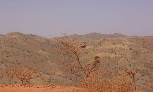 Zdjecie ETIOPIA / Północna Etiopia / gdzieś po drodze / Prawie martwa natura