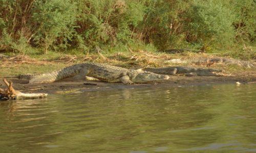 Zdjęcie ETIOPIA / pd. Etiopia / Lake Chamo, Nechisar National Park / Krokodyle