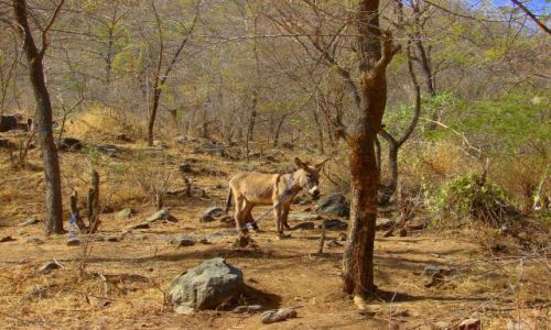 Zdjęcie ETIOPIA / Etiopia / Etiopia / Osioł