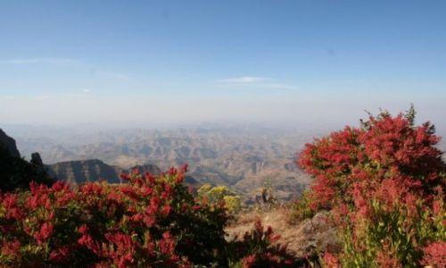 Zdjecie ETIOPIA / brak / Góry Simen / etiopska roślinność
