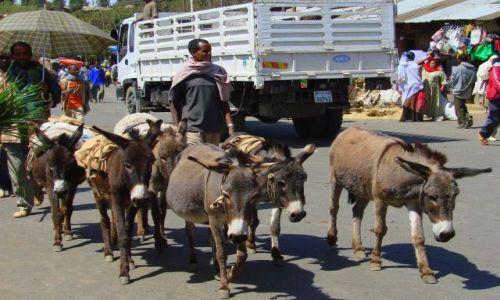 Zdjęcie ETIOPIA / Gandor / Gandor / Do  pracy