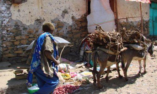Zdjęcie ETIOPIA / Gandor / Gandor / Wio  osiołku  wio