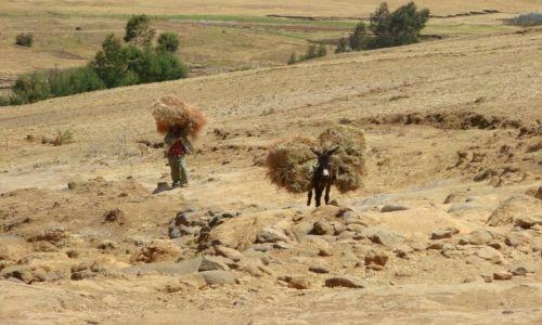 Zdjęcie ETIOPIA / Debork / Debork / Pani i  osioł