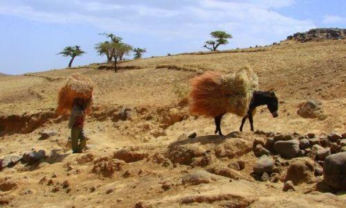 Zdjęcie ETIOPIA / Debork / Debork / Transport
