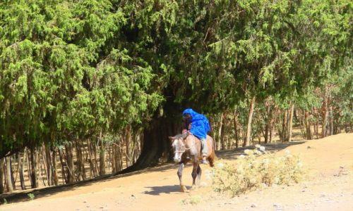 Zdjęcie ETIOPIA / Debarg / Debarg / Senny  na  koniu