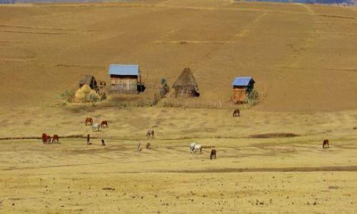 Zdjęcie ETIOPIA / Debarg / Debarg / Wioska