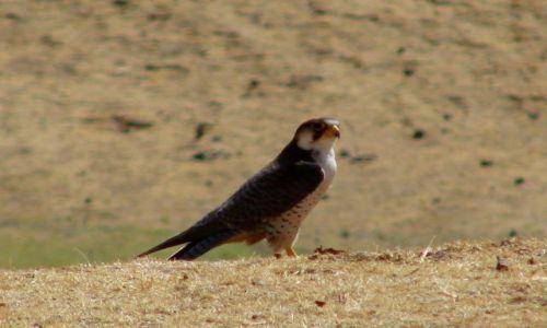 Zdjęcie ETIOPIA / Debarg / Debarg / Ptok