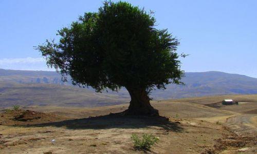 Zdjęcie ETIOPIA / Debarg / Debarg / Samotne