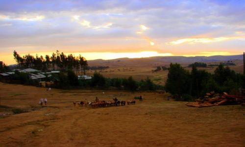 Zdjęcie ETIOPIA / Debark / Debark / Stado