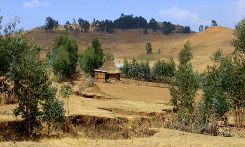 Zdjęcie ETIOPIA / Debark / Debark / Domek