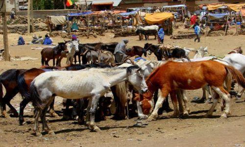 Zdjęcie ETIOPIA / Debork / Debork / Targ
