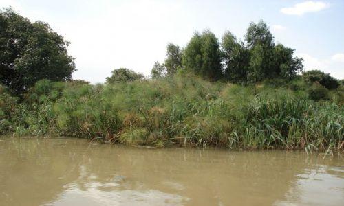 Zdjęcie ETIOPIA / Amhara / okolice Bahar Dar / Jezioro Tana / Papirusy