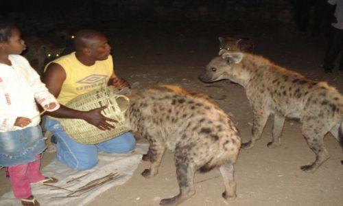 Zdjecie ETIOPIA / Harari / Harar / Karmienie hien