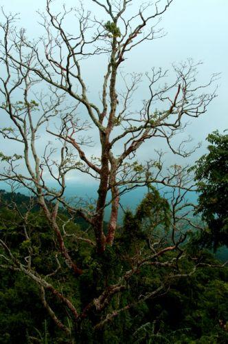 Zdjęcia: LUZON, Tagaytay, FIDŻI