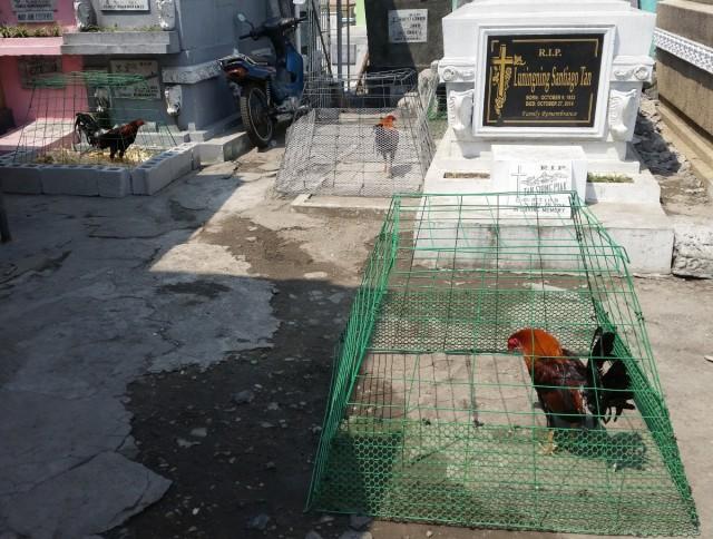 Zdjęcia: Cmentarz Północny, Manila, Koguty, FILIPINY