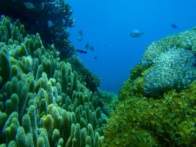 Zdjęcia: Wyspa Ticao, Filipiny podwodne, FILIPINY