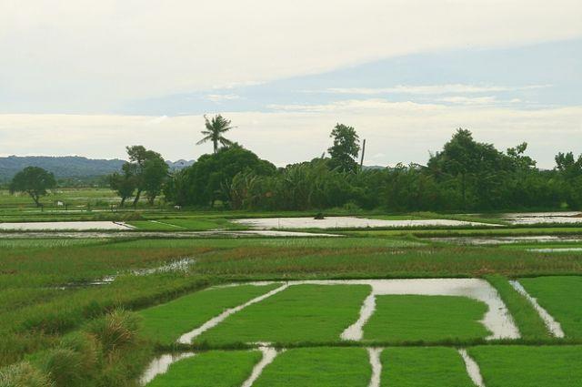 Zdjęcia: Agoo, Płn. Luzon, Pola ryżowe w San Julian, FILIPINY