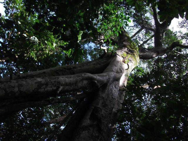 Zdjęcia: Sabang i okolice, Palawan, .... Ent ...., FILIPINY