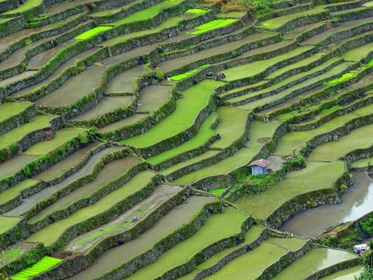 Zdjęcia: Batad, Północny Luzon, Zielone wafelki, FILIPINY