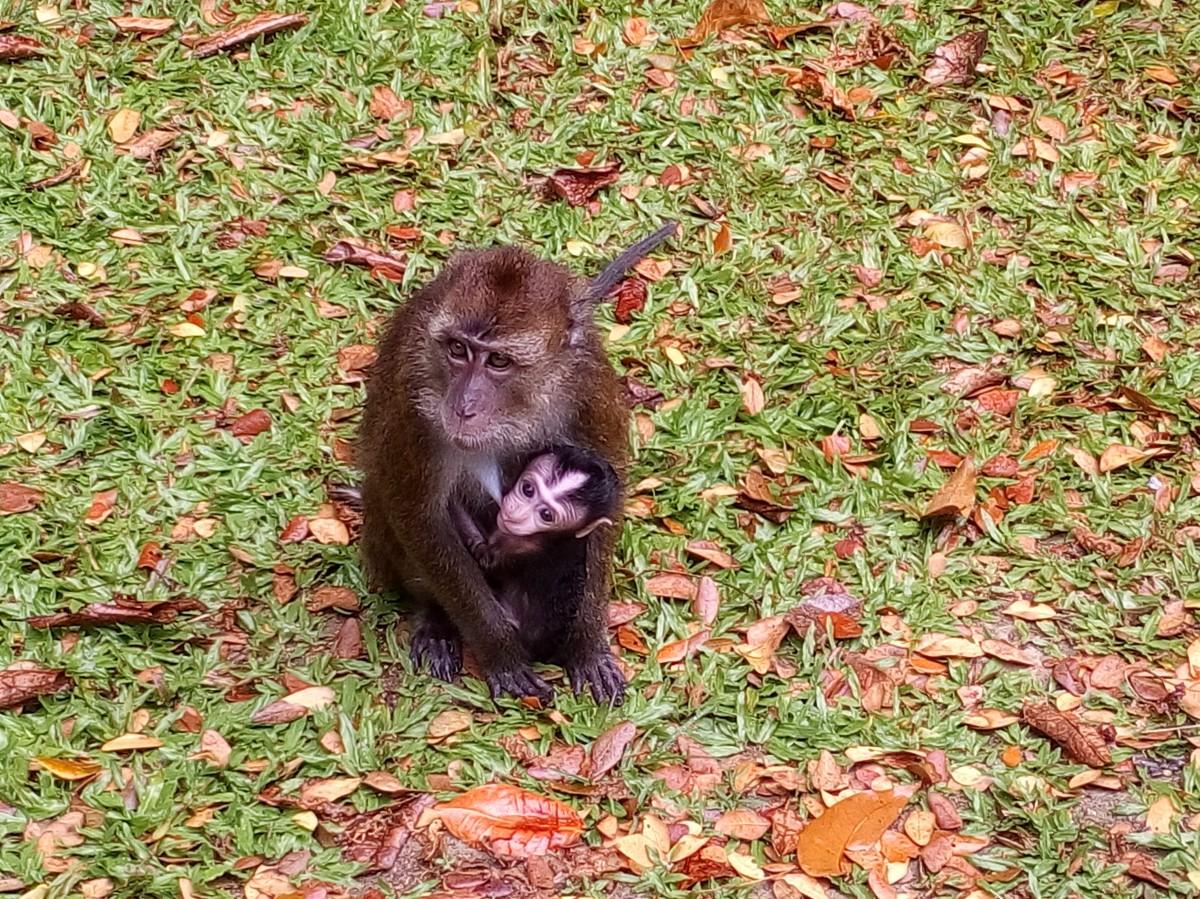 Zdjęcia: Bohol, Bohol, małpki, FILIPINY