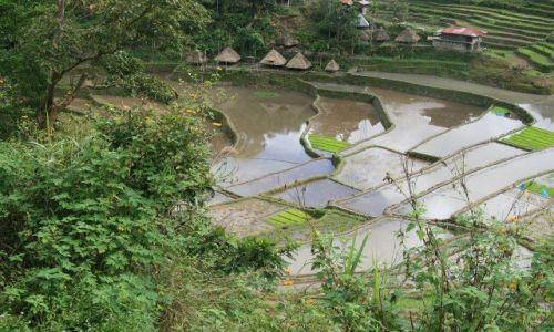 Zdjęcie FILIPINY / Banaue / Batad / Tarasy ryzowe