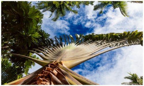 Zdjęcie FILIPINY / Busuanga / Ocamocam / Tropical...