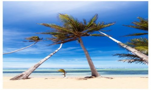 Zdjęcie FILIPINY / Cuyo Island / Magsaysay / Lonley Beach