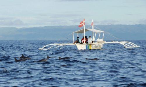 Zdjecie FILIPINY / Bohol / okolice Pangalo Island / Delfinki o poranku