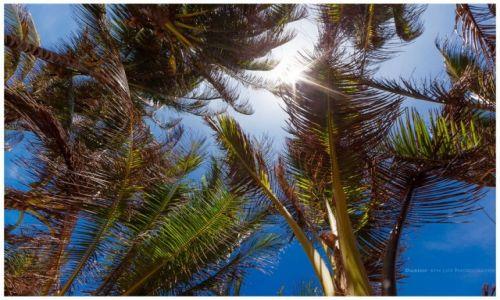 Zdjęcie FILIPINY / Cuyo Island / Magsaysay / Under the Palm Trees