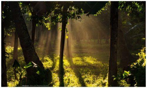 Zdjęcie FILIPINY / Mindanao / Camiguin / Palmtree Forest