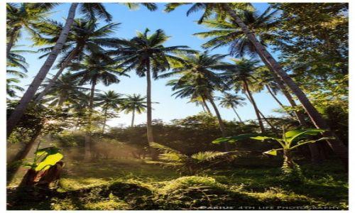 Zdjęcie FILIPINY / Mindanao / Camiguin / Palm Trees