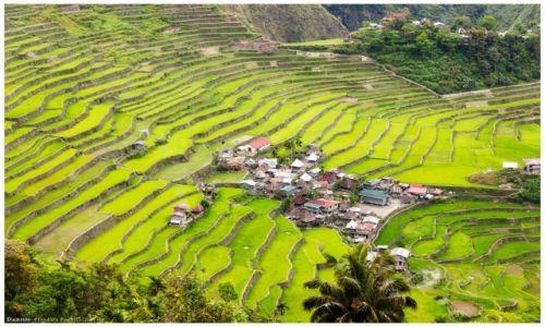 Zdjęcie FILIPINY / Luzon / Batad / Batad