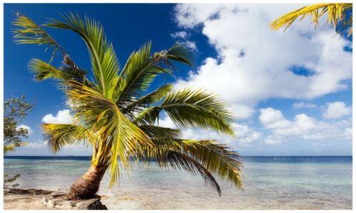 Zdjęcie FILIPINY / Cebu / Moalboal / Palm Tree