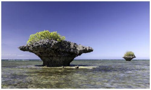 Zdjęcie FILIPINY / Cebu / Moalboal / Volcanic Mushrooms