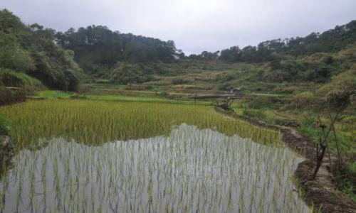 Zdjęcie FILIPINY / N Luzon / Banaue / Pole ryżowe
