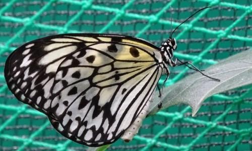 Zdjęcie FILIPINY / wyspa Bohol / gdzieś tam / Też mam motylka ;)