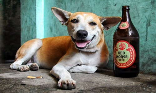 FILIPINY / luzon / Navotas / Red Horse