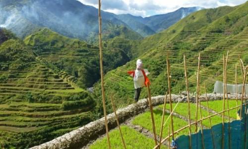 Zdjecie FILIPINY / Ifugao / Banaue / Tarasy ryżowe Banaue