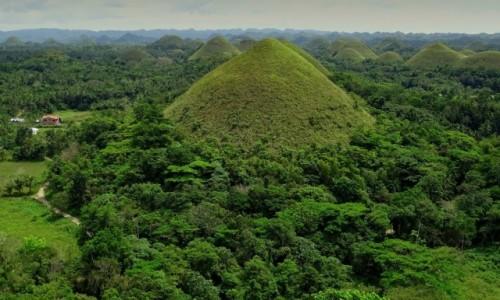 Zdjecie FILIPINY / wyspa Bohol / Chocolate Hills / W soczystej zieleni