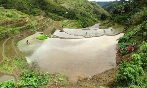 Zdjecie FILIPINY / Północny Luzon / Między Batad a Bangaan / Czas posadzić ryż
